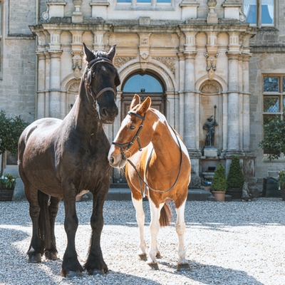 Unbridled love at Orchardleigh Estate wedding venue in Somerset