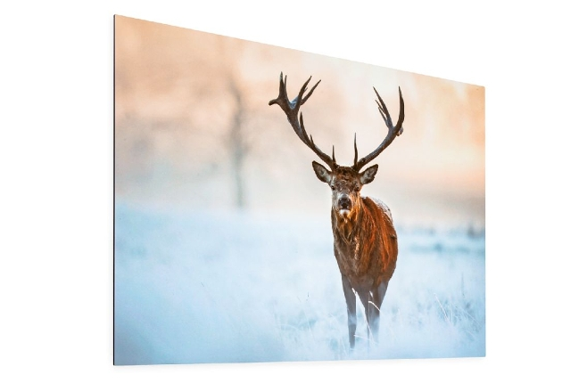 artwork of a stag on a picture